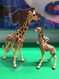 animal giraffes