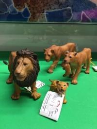animal lions