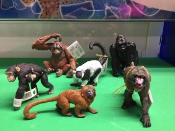 animal primates