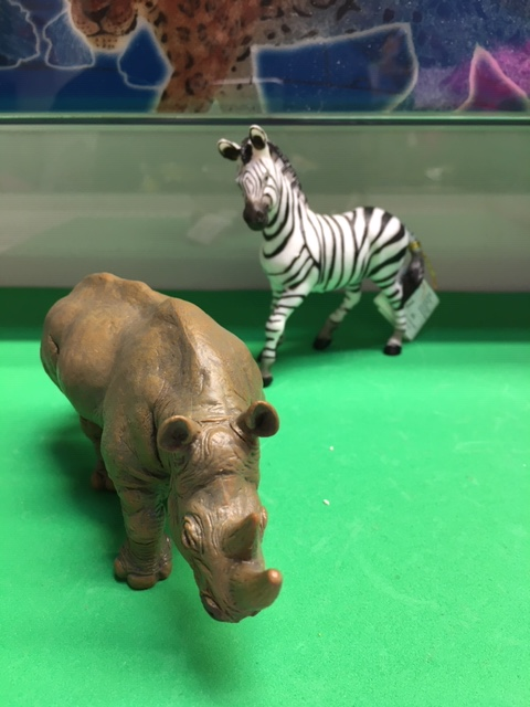 animal zebra and rhino